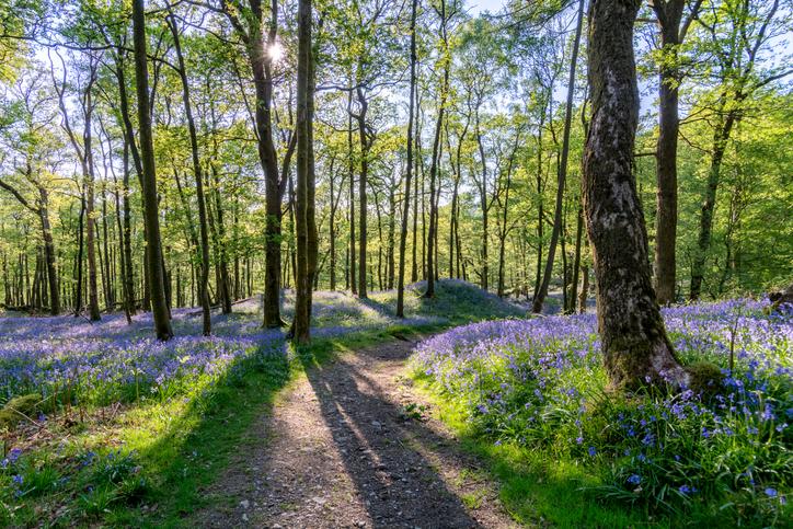 Natural Environment App Image